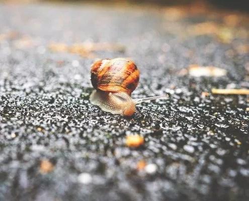 Slowpreneur : la clé c'est la gestion du temps