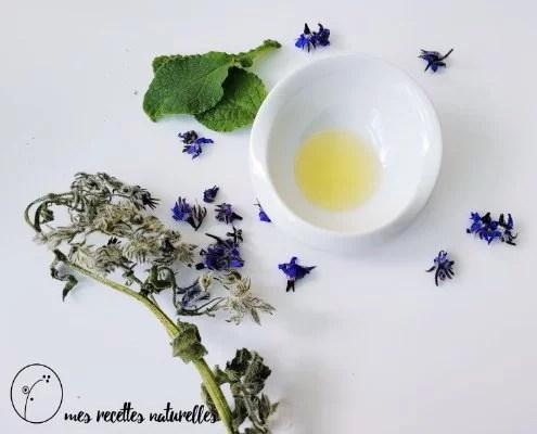 bourrache recette cosmétiques et santé
