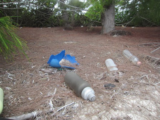 Plastic Trash and Pine Needles