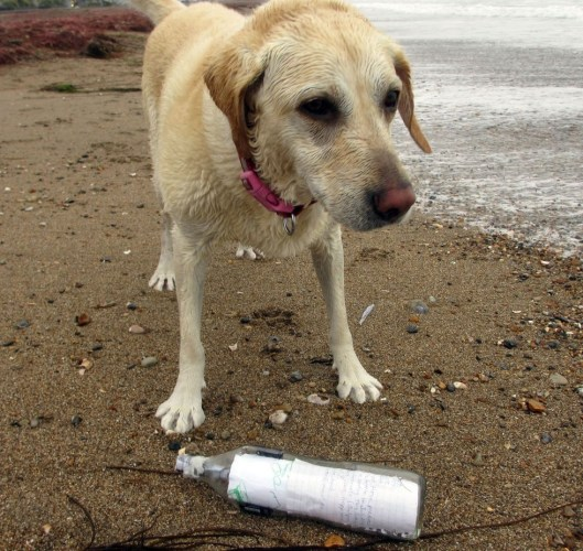 Messages in Bottles Found By Doggos - Sheba on Beach