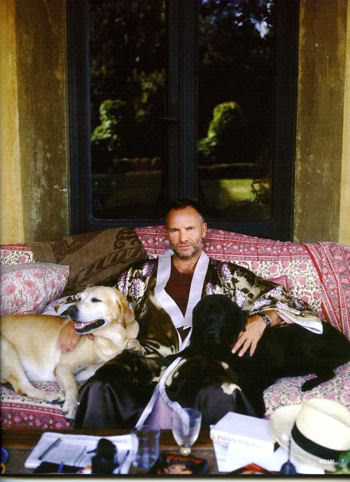 Sting with Dogs