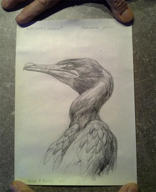 boorujy-bird-sketch-in-bottle-ny-pelagic