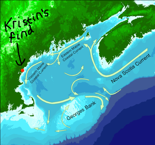 Gulf of Maine Current Map.jpg