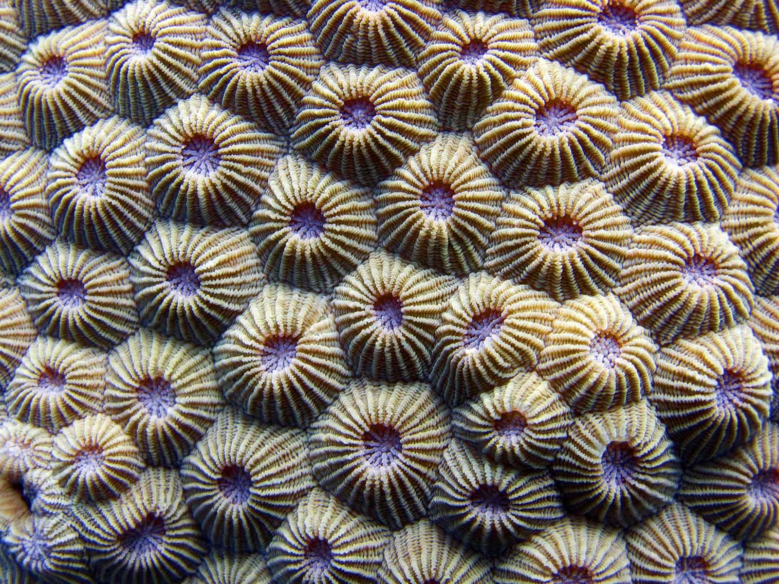 ocean patterns coral ile ilgili görsel sonucu