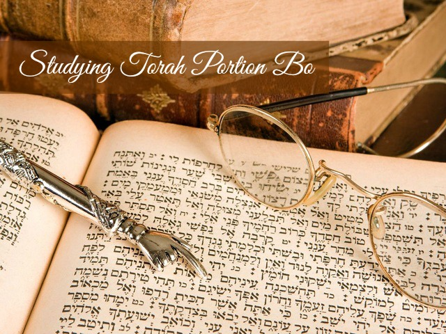torah portion bo