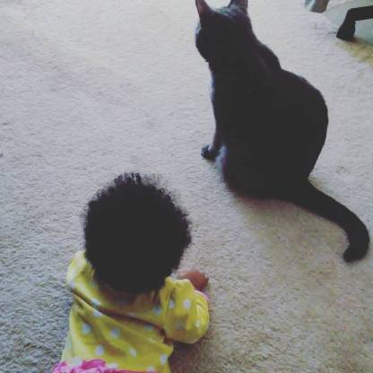 Baby Bird chasing the cat, Tinsel