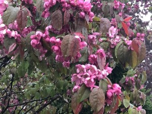 tree-flowers-rain