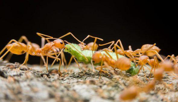 На муравейник заговоры