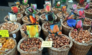 Vente de bulbes de tulipes au marché aux fleurs d'Amsterdam