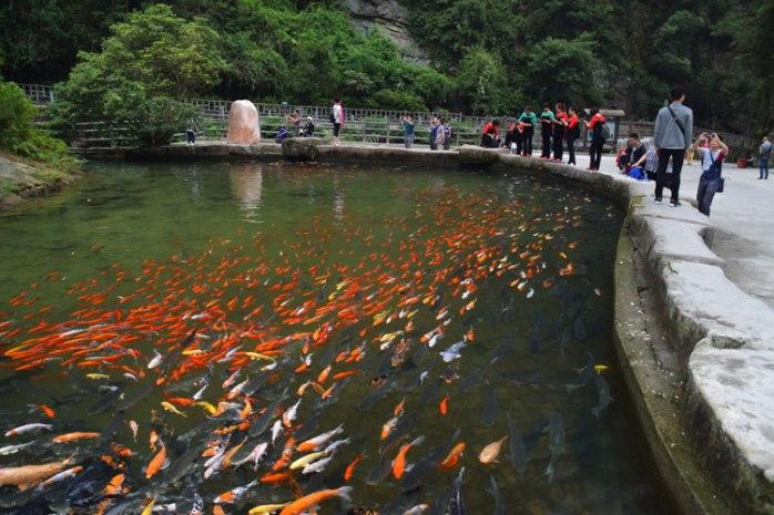 baofeng-poissons