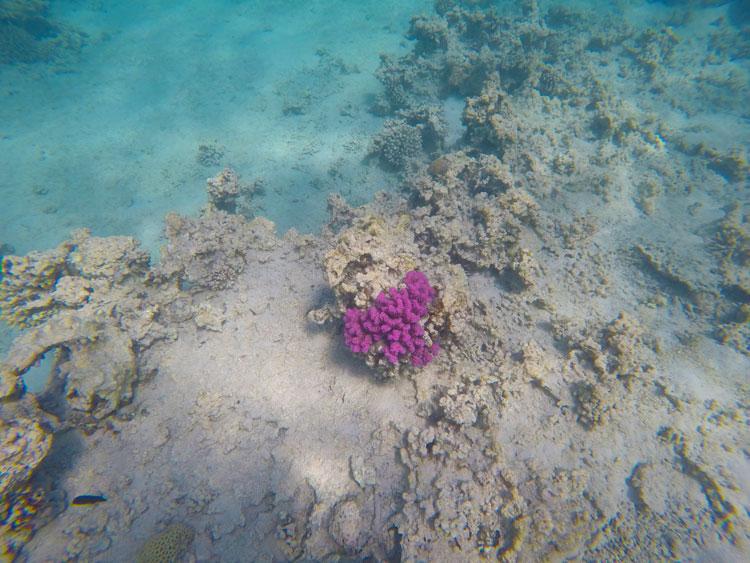 snorkeling-aqaba-mer-rouge-4
