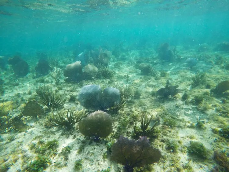 snorkelin-isla Cozumel