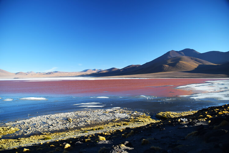 Sud Lipez laguna colorada