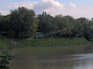 Florence - Les pêcheurs du dimanche