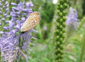 Prague - Jardin botanique, insectes