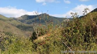 Pyrénées-Orientales - Evol - Au hasard des rues