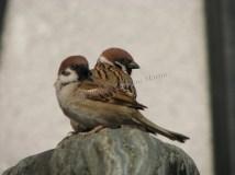 Tokyo - Tour de Tokyo, oiseaux