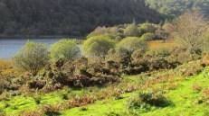 Wicklow mountains - Glendalough - Lower lake