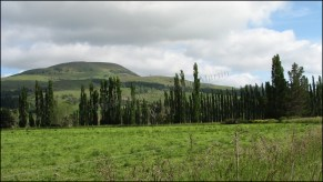 Entre Oamaru et Dunedin