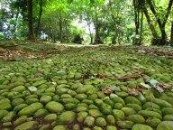 Bogor - Jardin Botanique