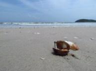 Ile Langkawi - Pantai Cenang - Plage, coquillages