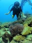 Ile Tioman - Plongée avec némo