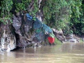 Voyage en bateau sur la Rivière Irrawaddy de Kata à Bhamo, perroquet
