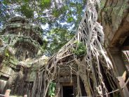 Siem Reap - Temple 'Ta Prohm'