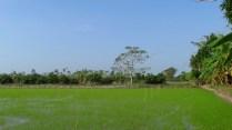 Can Tho - Sur la rivière 'Hau', les rizières