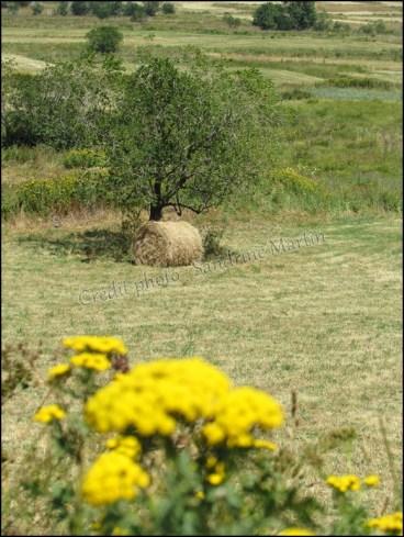 Pyrénées-Orientales - Les environs des Angles - Sur le chemin