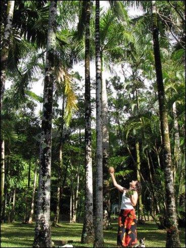 Cap Tribulation - PK's Village Jungle