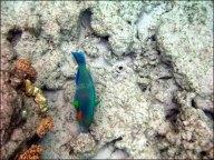 La grande barrière de Corail - Snorkeling