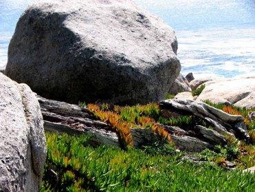 Californie - Monterey - Carmel by the sea