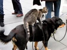 Californie - San Francisco - Au hasard des rues - Balade du chien, chat et souris