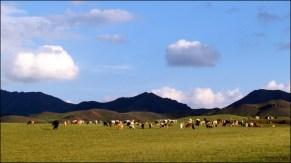Sur la route - Campement, troupeaux de chèvres et moutons
