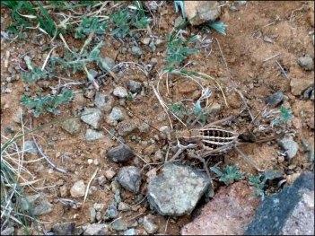 Sur la route de Baga Gazriin chuluu, insecte