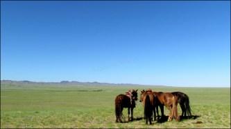 Sur la route, festival du Nadaam de village 'Course de chevaux'