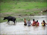 Parc national de Chitwan - Jungle, balade, traversée de la rivière 'Narayani-Rapti'