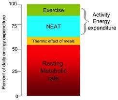以產熱為基礎來介入肥胖