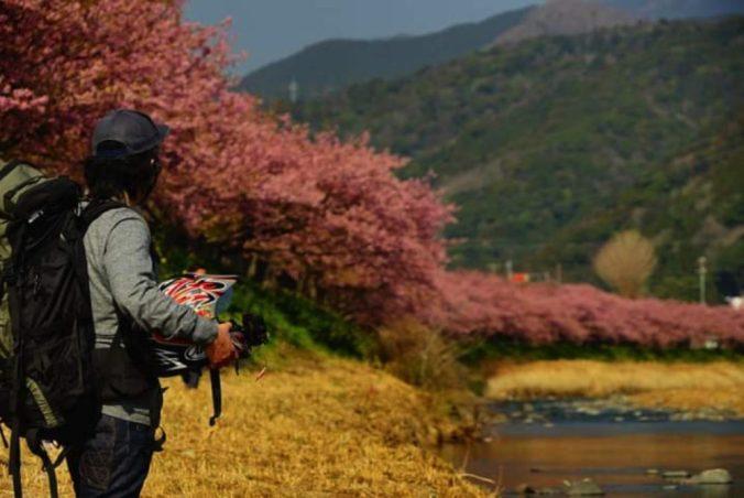 河津桜に魅せられている