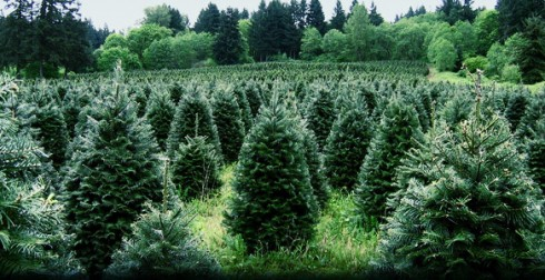 The Green Christmas Tree Tips And Alternatives