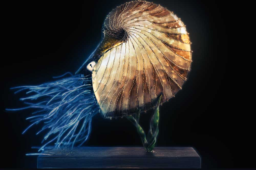 Metal Sculpture Nautilus on timber stand black background