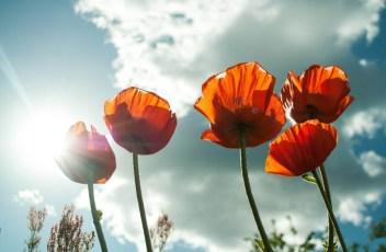 flower-399409_1920