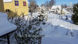 winter garden 4