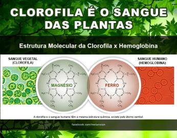 Clorofila & Hemoglobina