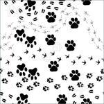 Animal-Footprints-2032692