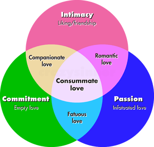 Intimacy passion and commitment