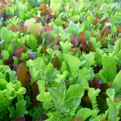 Picture of a Salad Mix