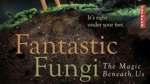 Fantastic Fungi @ The Orpheum Theater