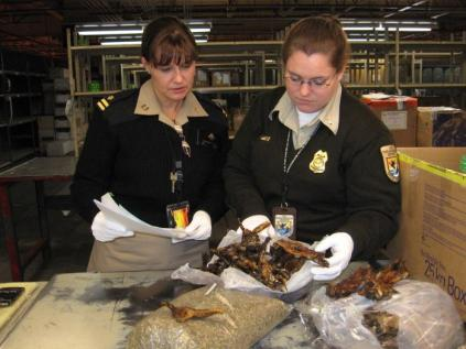 Staff from the Centers for Disease Control and the U.S. Fish and Wildlife Service inspect bushmeat being imported into the U.S. (Photo: Derek Sakris/CDC)